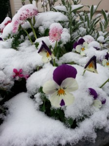 Flowers in snow